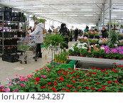 Измайловский совхоз декоративного садоводства, Москва (2011 год). Редакционное фото, фотограф lana1501 / Фотобанк Лори