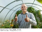 Бизнесмен с теплице с помидорами. Стоковое фото, фотограф Яков Филимонов / Фотобанк Лори