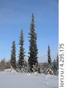 Купить «Зимний пейзаж», фото № 4295175, снято 12 января 2013 г. (c) Владимир Ильин / Фотобанк Лори