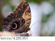 Бабочка крупным планом. Стоковое фото, фотограф Olha Ukhal / Фотобанк Лори