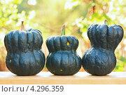 Три тыквы. Стоковое фото, фотограф Olha Ukhal / Фотобанк Лори
