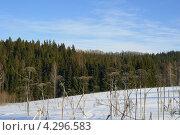 Хвойный лес зимой. Стоковое фото, фотограф Владимир Аликин / Фотобанк Лори