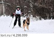 Купить «Эстафета по скиджорингу», фото № 4298099, снято 9 февраля 2013 г. (c) Сергей Громогласов / Фотобанк Лори