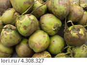 Кокосовые орехи. Стоковое фото, фотограф Сергей Шустов / Фотобанк Лори