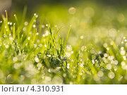Капли росы на траве в солнечном свете. Стоковое фото, фотограф Елена Корнеева / Фотобанк Лори