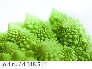 Купить «Капуста романеско крупным планом на белом фоне, Brassica oleracea», фото № 4318511, снято 1 февраля 2013 г. (c) Сурикова Ирина / Фотобанк Лори