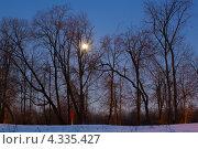 Луна сквозь ветки деревьев. Стоковое фото, фотограф Алексей Егоров / Фотобанк Лори