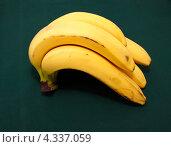 Купить «Связка бананов на темно-зеленом фоне», фото № 4337059, снято 22 февраля 2013 г. (c) Наталья Осипова / Фотобанк Лори