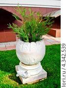 Декоративный парковый вазон с растениями. Стоковое фото, фотограф kraser / Фотобанк Лори