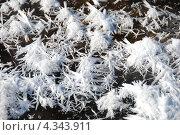 Купить «Снежинки на льду», эксклюзивное фото № 4343911, снято 2 марта 2011 г. (c) lana1501 / Фотобанк Лори
