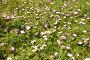 Трава с цветами, эксклюзивное фото № 4350683, снято 30 апреля 2012 г. (c) Владимир Чинин / Фотобанк Лори