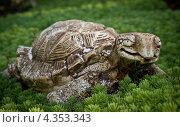 Декоративная черепаха на траве. Стоковое фото, фотограф денис рожко / Фотобанк Лори