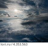Чайка в бескрайнем небе. Стоковое фото, фотограф Виктор Пелих / Фотобанк Лори