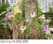 Орхидеи. Стоковое фото, фотограф Паюсова Светлана / Фотобанк Лори