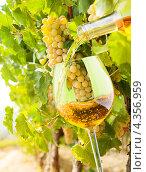 Купить «Вино льется из бутылка в стеклянный бокал на фоне винограда», фото № 4356959, снято 12 сентября 2012 г. (c) Сергей Новиков / Фотобанк Лори
