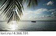 Красивый вид на море с лодкой и свисающей веткой пальмы. Стоковое видео, видеограф Soft light / Фотобанк Лори