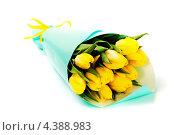 Купить «Букет желтых тюльпанов в обертке», фото № 4388983, снято 18 января 2013 г. (c) Наталия Кленова / Фотобанк Лори