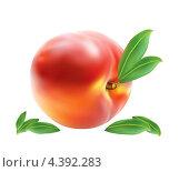 Персик с листочками. Стоковая иллюстрация, иллюстратор Артём Садовников / Фотобанк Лори