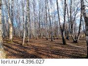 Березняк. Стоковое фото, фотограф ValeriyK / Фотобанк Лори