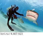 Тигровая акула и дайвер (2012 год). Редакционное фото, фотограф Игорь Анатольевич / Фотобанк Лори