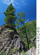 Купить «Молодой сибирский кедр на вершине скалы (лат. Pínus sibírica)», фото № 4412415, снято 10 июля 2011 г. (c) Виктория Катьянова / Фотобанк Лори