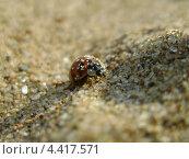 Купить «Божья коровка на песке», фото № 4417571, снято 5 июля 2011 г. (c) Корнилова Светлана / Фотобанк Лори