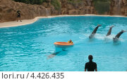 Представление с дельфинами в Лоро-Парке. Тенерифе. Канарские острова (2012 год). Редакционное видео, видеограф Михаил Марков / Фотобанк Лори