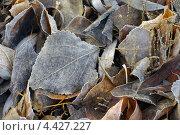 Опавшие листья. Стоковое фото, фотограф Ковалева Наталья / Фотобанк Лори
