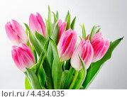 Купить «Букет розовых тюльпанов в каплях воды на сером фоне», фото № 4434035, снято 18 марта 2013 г. (c) Tatjana Baibakova / Фотобанк Лори