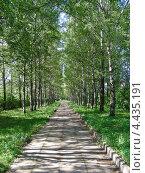 Купить «Березовая аллея в парке», эксклюзивное фото № 4435191, снято 30 июня 2010 г. (c) lana1501 / Фотобанк Лори
