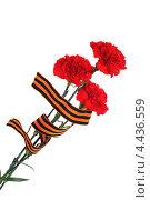 Три гвоздики и георгиевская лента. 9 мая. Стоковое фото, фотограф Юрий Морозов / Фотобанк Лори