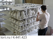 Купить «Гжельский фарфоровый завод, продукция для обжига в печи», эксклюзивное фото № 4441423, снято 15 марта 2013 г. (c) Дмитрий Неумоин / Фотобанк Лори