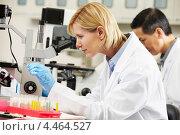 Ученые в лаборатории. Стоковое фото, фотограф Monkey Business Images / Фотобанк Лори