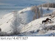 Горы Алтая зимой. Стоковое фото, фотограф Елена Бачурина / Фотобанк Лори