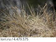 Сухая трава весной. Стоковое фото, фотограф Вера Мезенкова / Фотобанк Лори