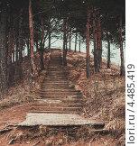 Лестница в лесу. Стоковое фото, фотограф Антон Соколенко / Фотобанк Лори