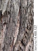 Купить «Фактура коры багрянника японского», эксклюзивное фото № 4488127, снято 9 апреля 2013 г. (c) Ната Антонова / Фотобанк Лори