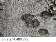 Купить «Фактура коры бука лесного сербского золотистого», эксклюзивное фото № 4489779, снято 9 апреля 2013 г. (c) Ната Антонова / Фотобанк Лори