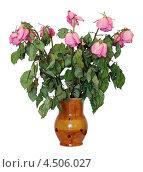 Высохший букет роз в глиняном кувшине, изолировано на белом фоне. Стоковое фото, фотограф Игорь Долгов / Фотобанк Лори