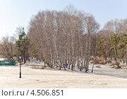 Купить «Березовая рощица на краю леса», эксклюзивное фото № 4506851, снято 13 апреля 2013 г. (c) Алёшина Оксана / Фотобанк Лори