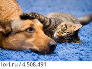 Котенок и собака. Стоковое фото, фотограф юлия юрочка / Фотобанк Лори
