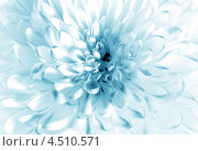 Купить «Голубой цветок», фото № 4510571, снято 17 августа 2012 г. (c) ElenArt / Фотобанк Лори