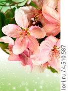 Купить «Цветы яблони», фото № 4510587, снято 19 мая 2012 г. (c) ElenArt / Фотобанк Лори