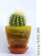 Купить «Эхинокактус Грусона (Echinocactus grusonii) в стеклянном горшке», эксклюзивное фото № 4531355, снято 21 октября 2018 г. (c) Елена Коромыслова / Фотобанк Лори