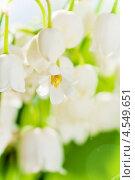 Купить «Букет ландышей», фото № 4549651, снято 10 июня 2012 г. (c) Игорь Соколов / Фотобанк Лори