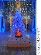 Рождественская ель. Стоковое фото, фотограф Синенко Юрий / Фотобанк Лори