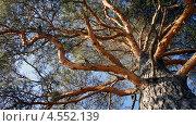 Дерево. Стоковое фото, фотограф Денис Воронцов / Фотобанк Лори