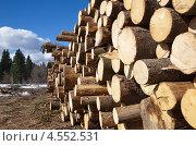 Купить «Сосновые бревна», эксклюзивное фото № 4552531, снято 21 апреля 2013 г. (c) Елена Коромыслова / Фотобанк Лори