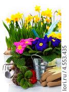 Купить «Цветы и садовый инвентарь», фото № 4553435, снято 11 февраля 2013 г. (c) Наталия Кленова / Фотобанк Лори