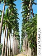 Купить «Ботанический сад в Рио-де-Жанейро», фото № 4564307, снято 14 февраля 2013 г. (c) Михаил Мандрыгин / Фотобанк Лори